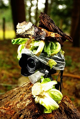 A pentax Ist DS disguised with bark and cabbage and protected from the drizzle by a plastic bag waits near our composter with very long remote trigger cord leading in the basement window.