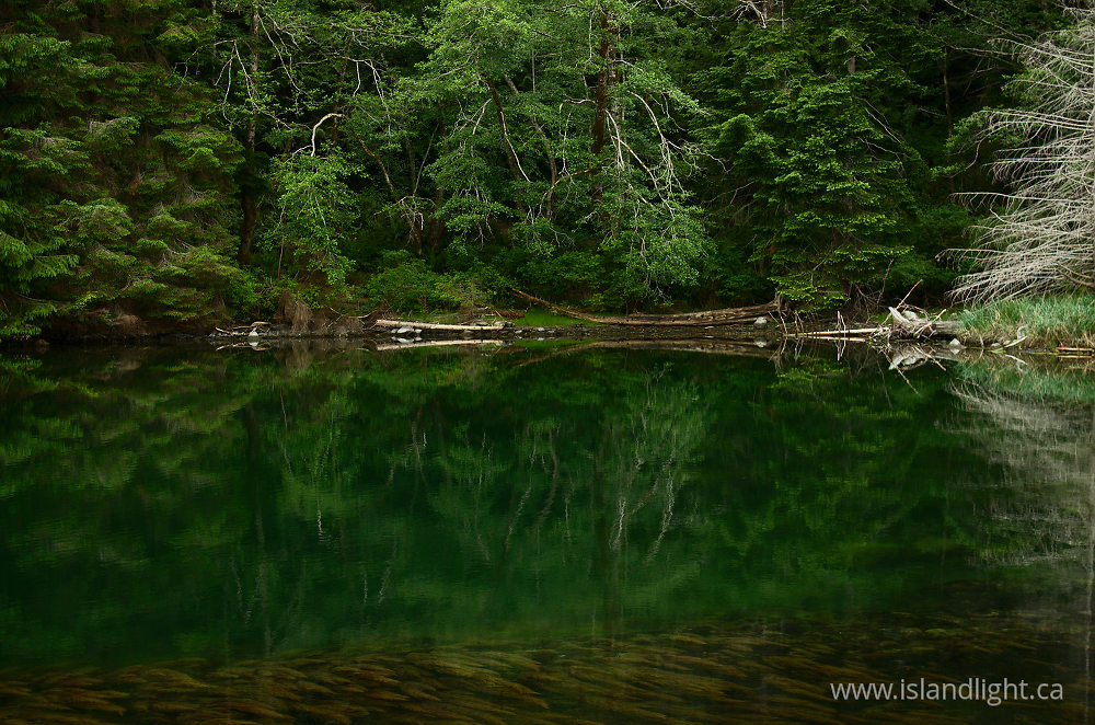 Landscape  photo from Carrington Lagoon Cortes Island, British Columbia Canada.