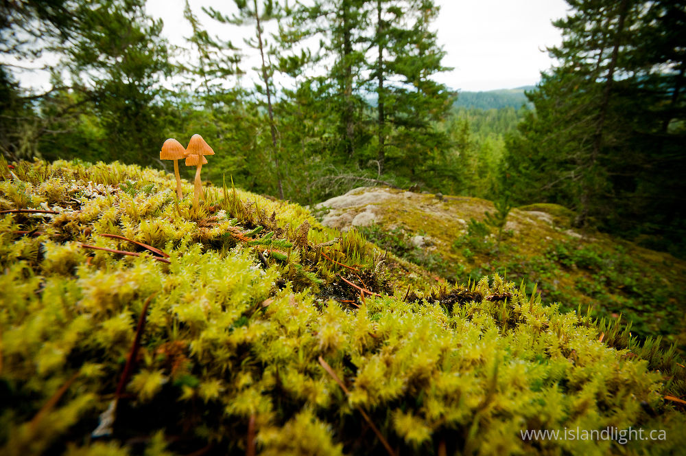 Plant  photo from Green Mountain Cortes Island, British Columbia Canada.