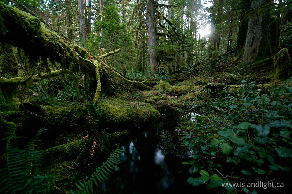 Landscape  photo from Grandfather Grove, Green Valley Cortes Island, BC Canada.