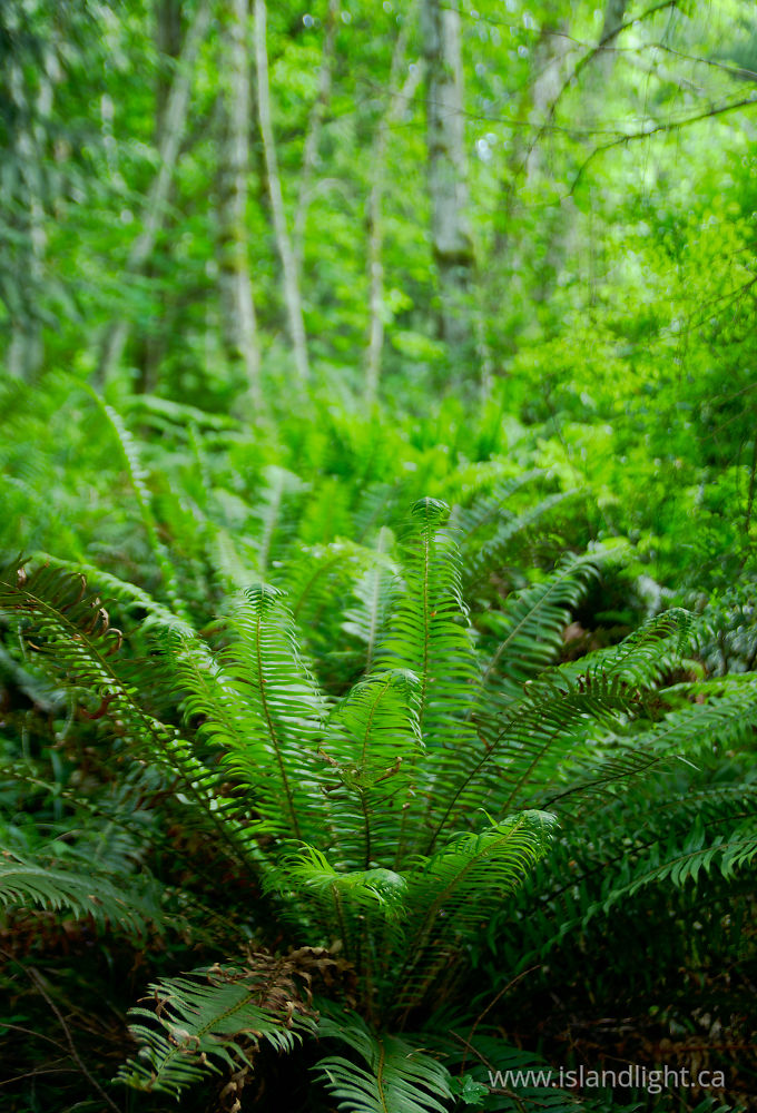 Plant  photo from  Marina Island, British Columbia Canada.