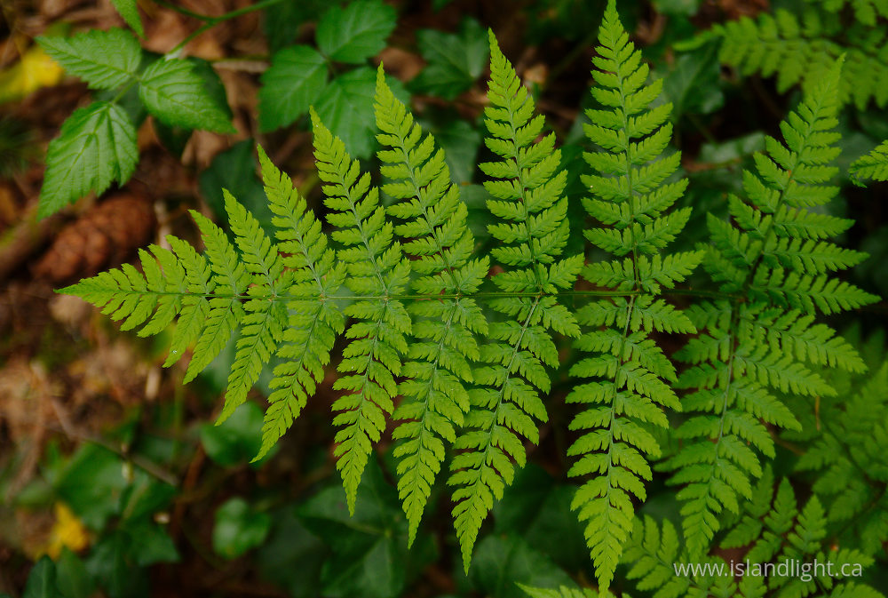 Plant photo from  Pacific Spirit Park, British Columbia Canada.