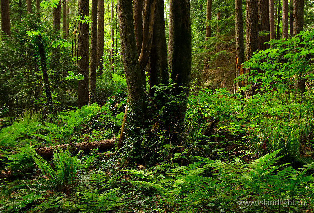 Landscape  photo from  Pacific Spirit Park, British Columbia Canada.
