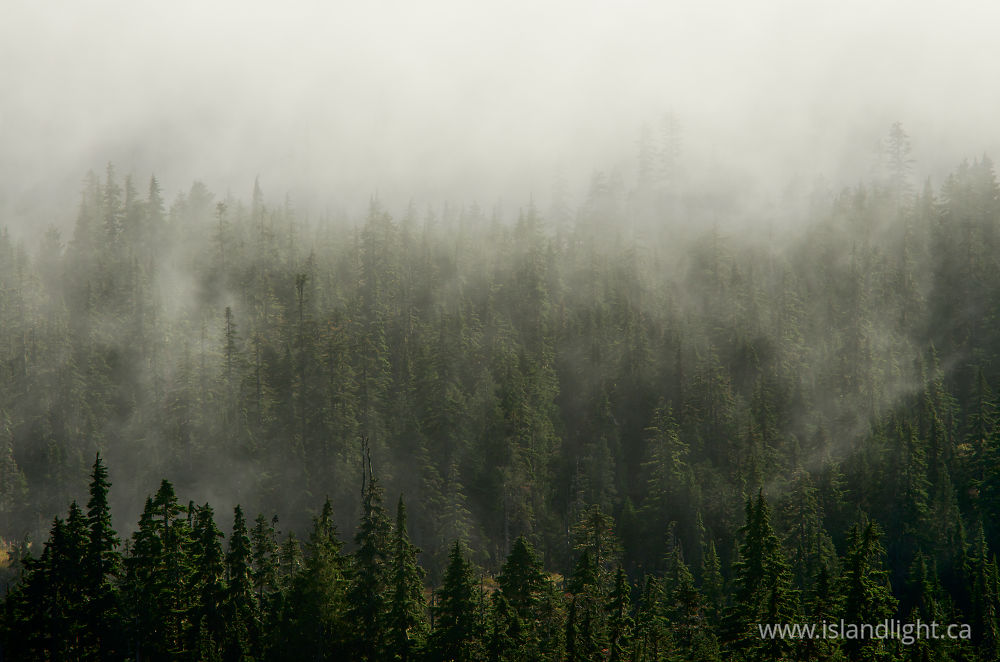 Landscape  photo from  Vancouver Island, British Columbia Canada.