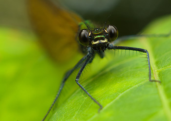 Dragonfly ~ Dragonfly picture from Aillevillers France.