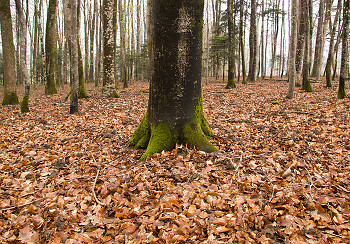Forest Floor ~ Forest picture from Aillevillers France.