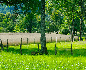 Fields and Trees ~ Landscape  picture from Aillevillers France.