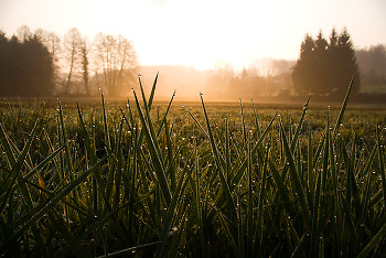 Morning Dew ~ Sunrise picture from Aillevillers France.