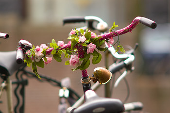 Bicycle picture from Amsterdam Netherlands.