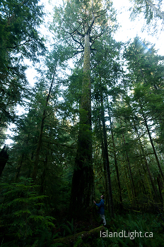 Beside a Giant ~ Tree picture from Basil Brook, Cortes Island Canada.