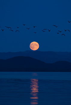 Moonrise Migration ~ Birds At Night picture from Calvert Island Canada.