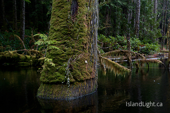 High Water Mark ~ Beaver pond picture from Cortes Island Canada.