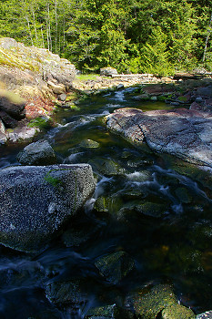 Creek picture from Cortes Island Canada.