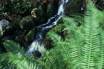 Stream ~ Creek picture from Cortes Island Canada.
