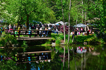 Seafest at The Gorge ~ event picture from Cortes Island Canada.