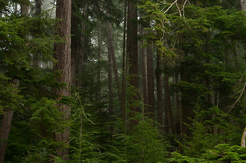 Portrait of a Rain-coast Ecosystem ~ Forest picture from Cortes Island Canada.