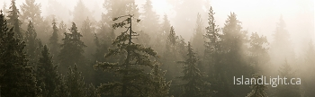 Tree Spirits ~ Forest picture from Cortes Island Canada.