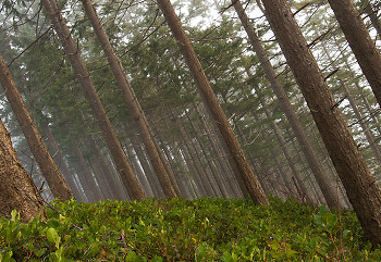 Southeaster ~ Forest picture from Cortes Island Canada.
