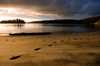 Footprints in the Sand ~ Landscape  picture from Cortes Island Canada.