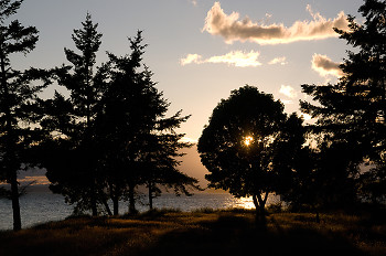 Sun Shines Through Tree ~ Landscape  picture from Cortes Island Canada.