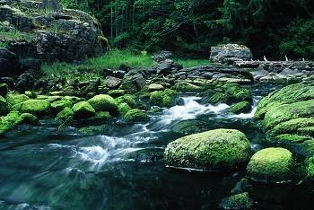Emerald Creek ~ Landscape picture from Cortes Island Canada.