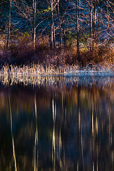Waters Edge ~ Landscape picture from Cortes Island Canada.