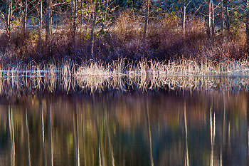 Waters Edge  II ~ Landscape  picture from Cortes Island Canada.