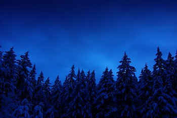 Winter Forest ~ Snow picture from Cortes Island Canada.