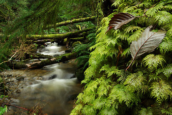 Leaves on Moss ~ Tree picture from Cortes Island Canada.