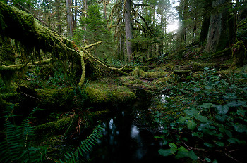 Wetland picture from Cortes Island Canada.