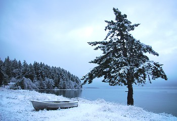 West Coast Chirstmas ~ Winter Landscape picture from Cortes Island Canada.