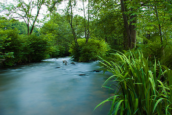 Springtime on the Auberonne River ~ Creek picture from France France.