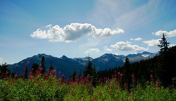 Fireweed in the Brandywine ~ Landscape  picture from Brandywine Canada.