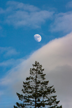 Luna ~ Moon picture from Cortes Island Canada.