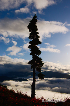 Way Up High on Mount Washington ~ Alpine picture from Mount Washington Canada.