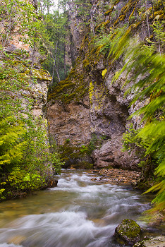 Springer Creek in Motion ~ Creek picture from Slocan Valley Canada.
