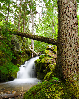Climax Creek Waterfall ~ Waterfall picture from Slocan Valley Canada.