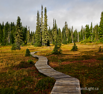 Paradise Meadows trail ~ Landscape  picture from Strathcona Provincial Park Canada.