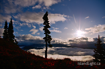 Life Above the Clouds ~ Alpine Landscape picture from Vancouver Island Canada.