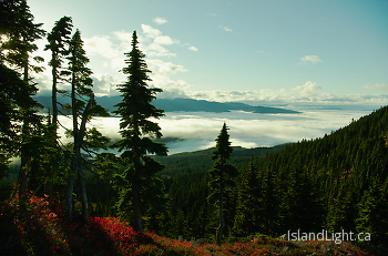 Above The Clouds ~ Alpine Landscape picture from Vancouver Island Canada.