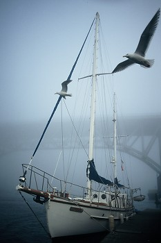 Seagull Patrol ~ Sailboat picture from Vancouver Canada.