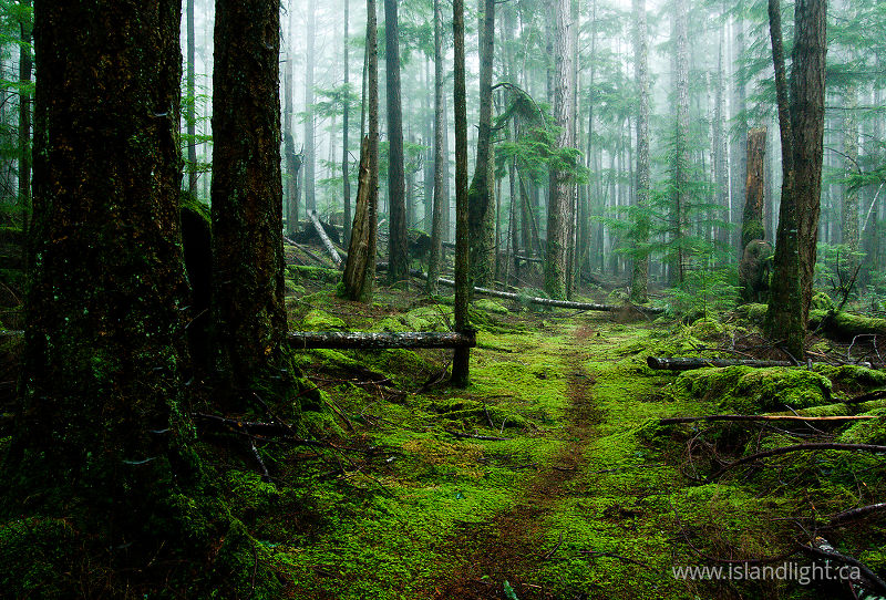 Forest path photo
