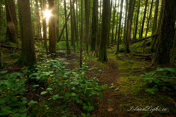 Landscape  photo from Green Mountain Cortes Island, BC Canada.