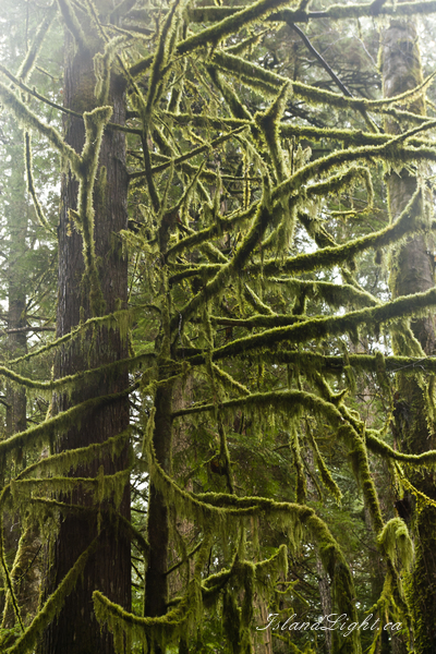 Temperate Rain Forest photo