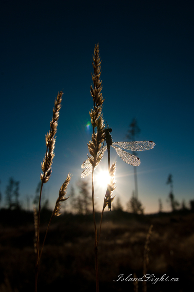 Damselfly photo