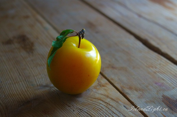 Yellow Plum -  Plum photo