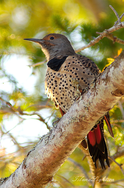Slightly Out Of Focus Flicker Photo - Cortes Island Flicker photo