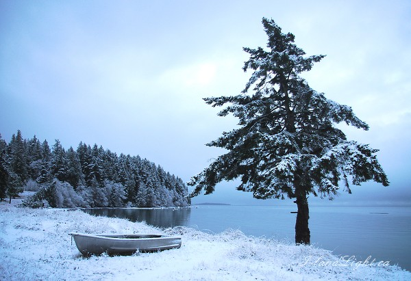 West Coast Chirstmas - Cortes Island Winter Landscape photo