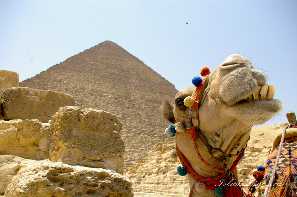 Mammal photo from  Giza,  Egypt.