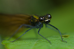 Damselfly Portrait -  Damselfly photo